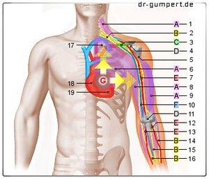 Scharfer Schmerz unter der linken Brust
