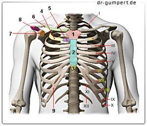 Brustkorbschmerzen durch Verspannungen