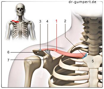 Übung bei Brustschmerzen am Brustbein