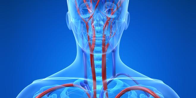 Arteria vertebralis
