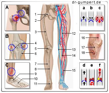 Schmerzen in den Beinen: Die häufigsten Ursachen
