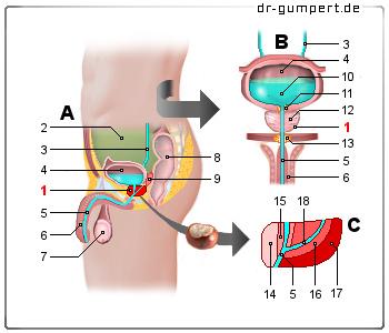 próstata de blutwerten