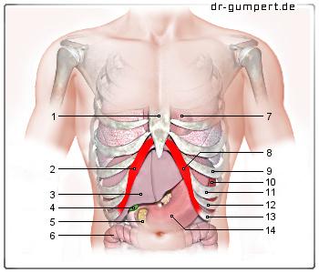 Schmerzen unter linken brust NetDoktorde