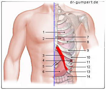Schmerzen Am Linken Rippenbogen Ursachen Und Therapieformen