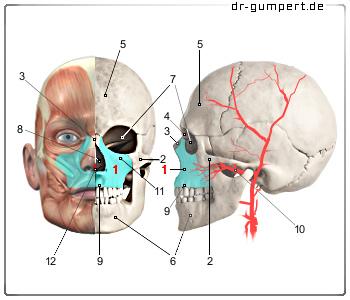 Diskusverlagerung des inneren Kiefergelenks