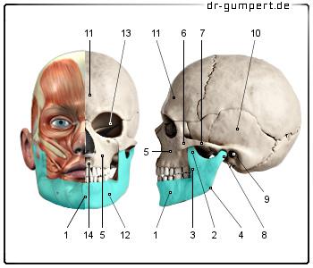 Rheuma: Immer auch das Kiefergelenk untersuchen