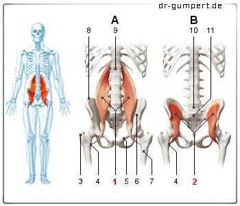 Lendenmuskel Dehnen