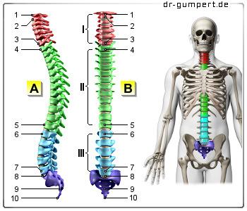 Der Pflaster auf den Rücken vom Schmerz für die Sportler