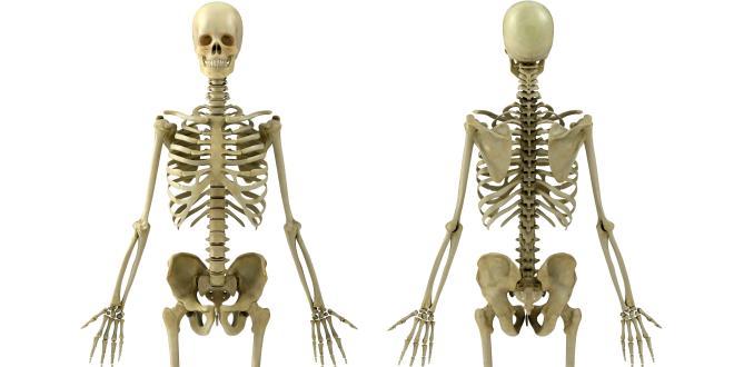 Knochendichte