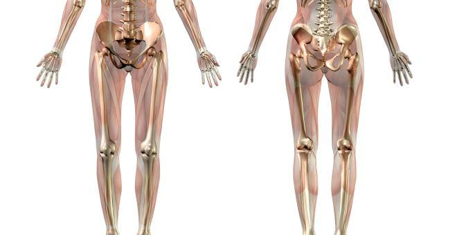 Oberschenkelknochen