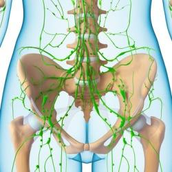 Armbeuge lymphknoten Lymphknoten überprüfen: