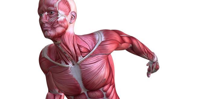 Großer Brustmuskel