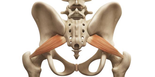 Musculus Piriformis Dehnen