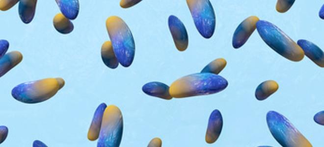 Welche Medikamente für die Prophylaxe der Parasiten