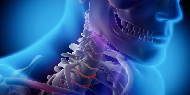 Rückenmarksnerven