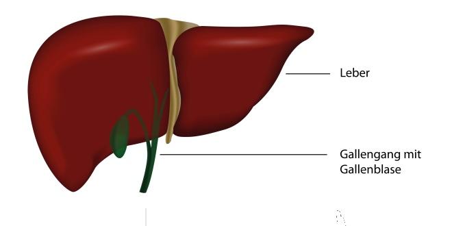 Erkrankungen der Leber und Gallenblase