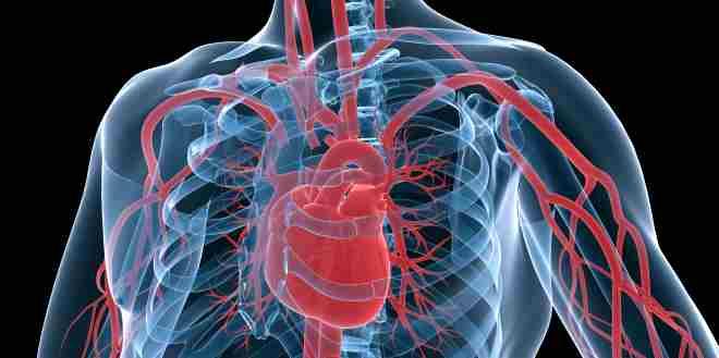 Arteria radialis
