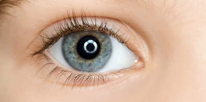 Netzhaut des Auges