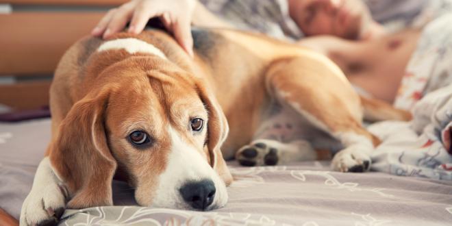Heilen hundeallergie Hundeallergie heilen