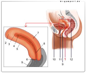 Entfernung gebärmutter wie lange krankgeschrieben