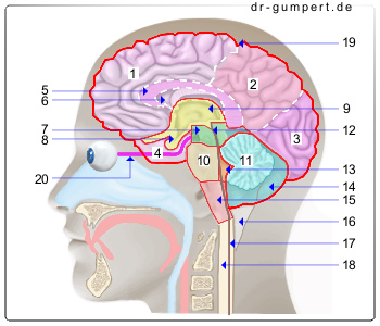 stoffwechselstörung im gehirn symptome