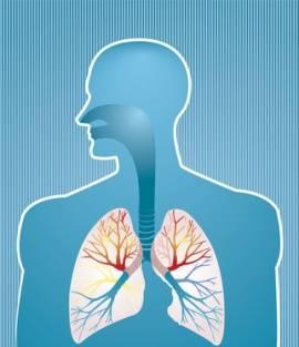 0f9aa3c8a9 Physiologie der menschlichen Atmung. Die Luft ...