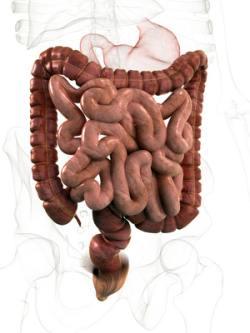 magen darm entzündung symptome
