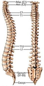 Was von der linken Seite des Rückens niedriger als Schulterblätter weh tun kann